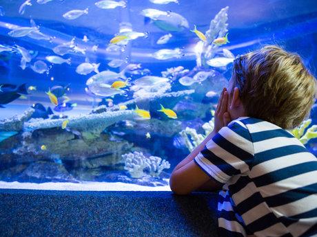 Aquarium Consulting/setup