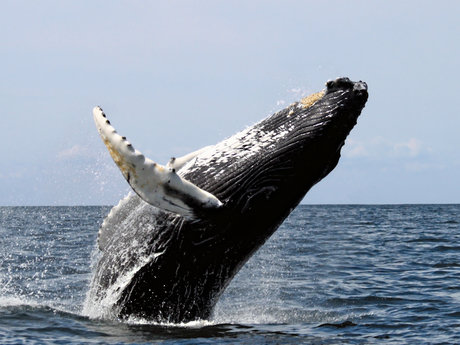 Random Whale Fact