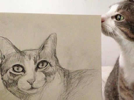 Pet sketch!