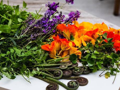 Foraging & Wild Edible Plants Walk