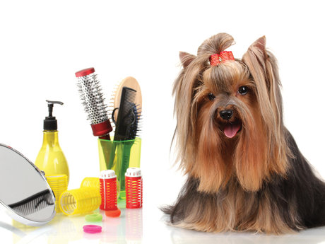 Learn Basic Grooming for your Pet
