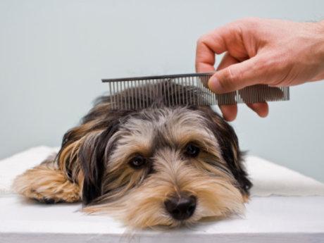Full service dog groom