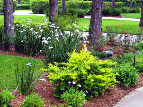 Landscaping consulting