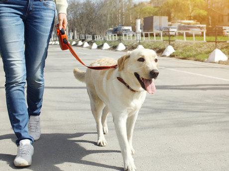 Evening dog walks