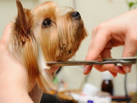 Dog or Cat nail trims!