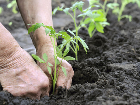 Virtual Organic Gardening Chat