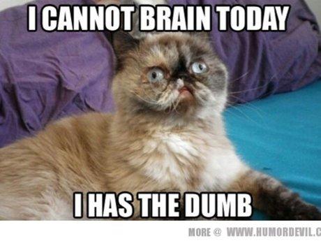 send you a great cat meme