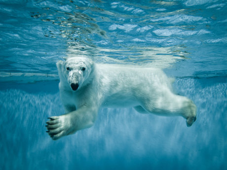 Let's talk about Polar Bears