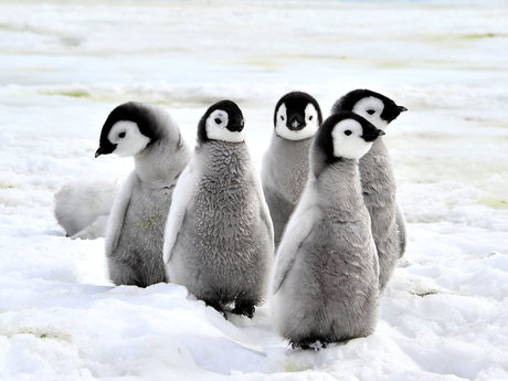 Lets talk about penguins!