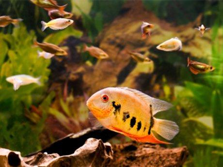 Aquarium/Fish Care Consultation