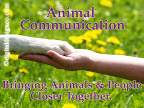 20min. Animal Communication Session