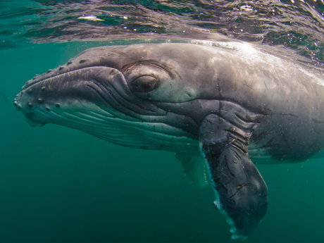 Lets talk about humpback whales!