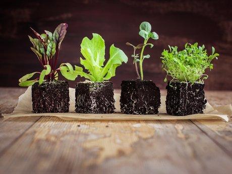Garden Health Consulting