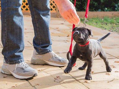 45min Dog Training evaluation