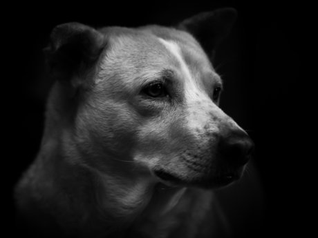 15 minute Pet Photography