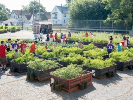 Beginner Urban Garden Planning