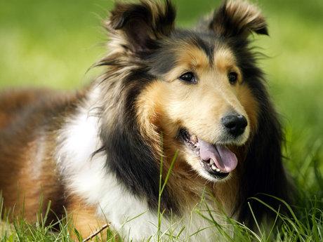 Dog Grooming. 🐶