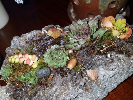 Succulent plant design