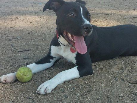 1 Hour Dog Training