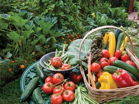 Organic gardening into