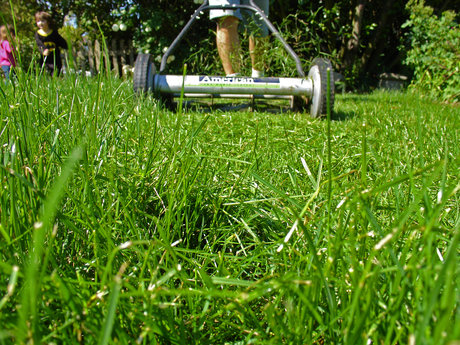 Mow your lawn!