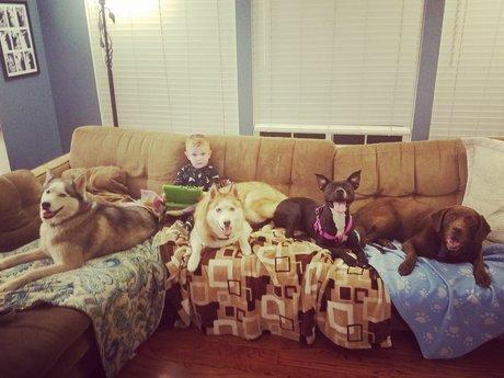 Emily's PuppyLand Daycare