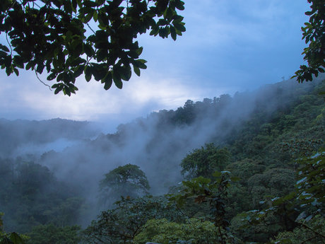 Pictures of Ecuadorian fruitforest!