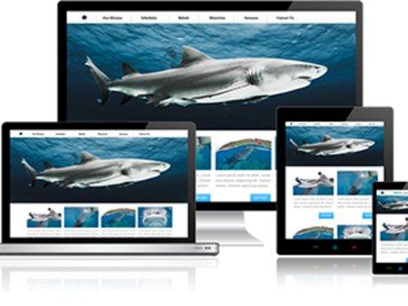 1 Hour Website/SEO Consultation