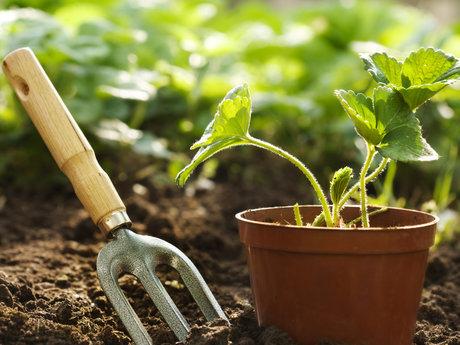 30 minute gardening lesson