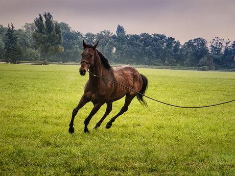 30 minutes of horse talk/ advice