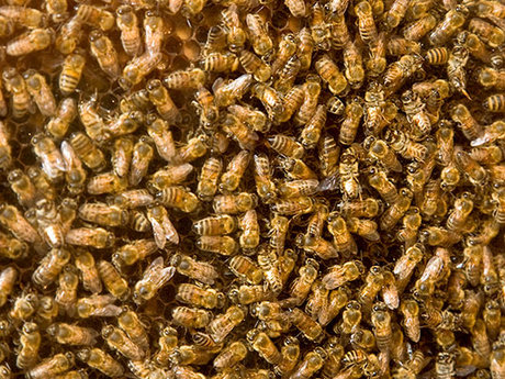 Beekeeping introduction