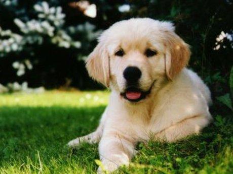 Doggy Nail Trim with Dremel
