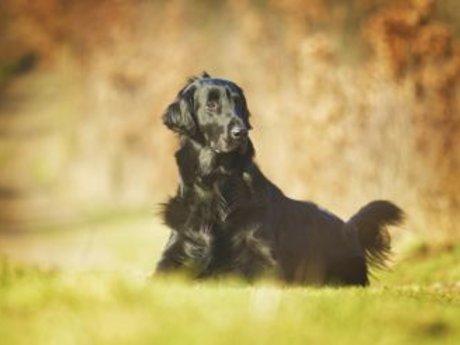 Dog Bath and Anal Gland Expression