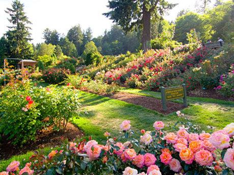 Garden/hydroponic design