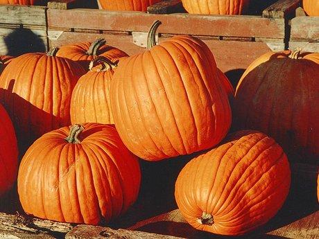 Pumpkins, you pick up