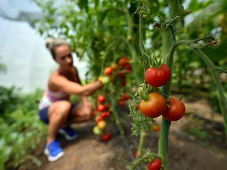 Organic Gardening Consultation