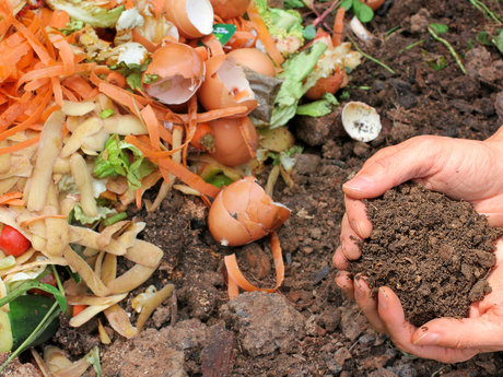 Recycling/composting lessons