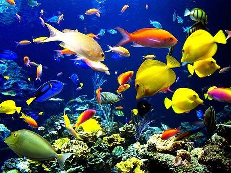Aquarium fish  guidance/assessment