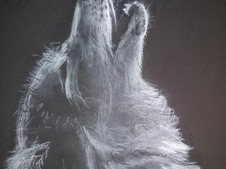 Wolf print 8.5x11
