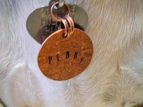 Custom Copper Pet Tag