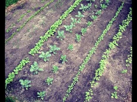 Plant/Garden/Farm Consulting