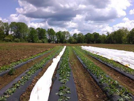 Organic Farm Start-up  Consulting