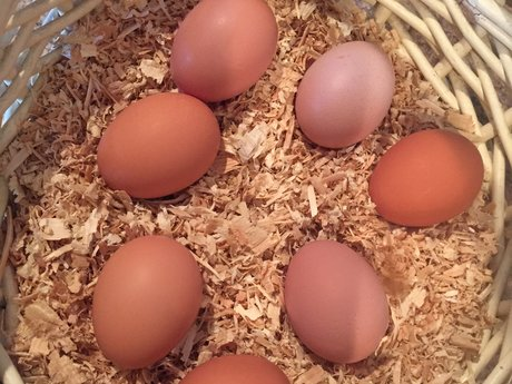 Farm Fresh Eggs (Denver Metro Area)