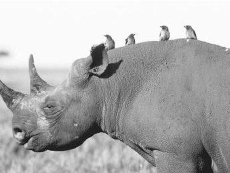Simbi Services Matchmaker