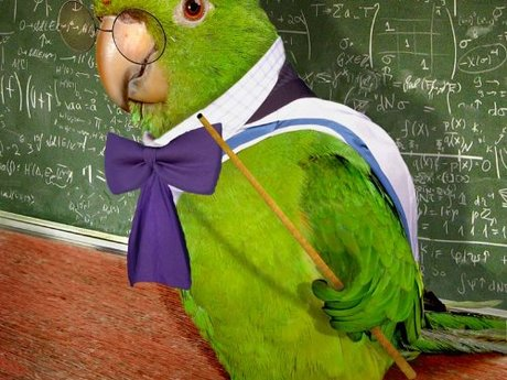 Pet Bird/Parrot Advice