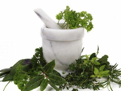 Create Plant Medicines