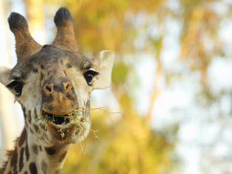 San Diego Zoo Safari Park informati