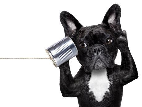 15-Minute Active Listener