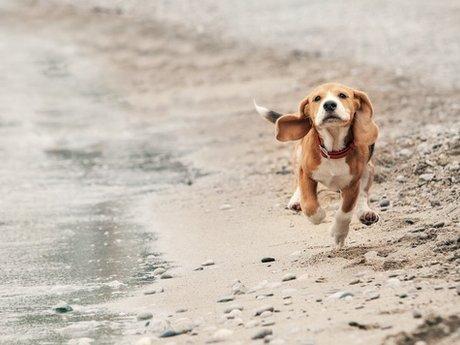 Dog Walking/General Care