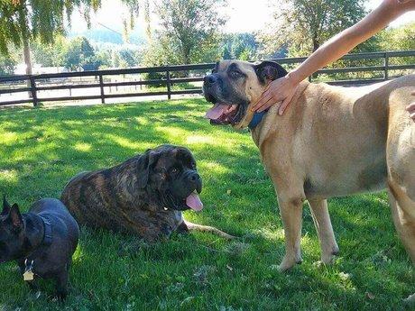 Sirius Heart Pet Care